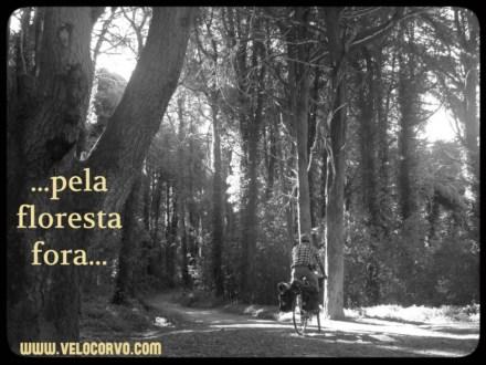 pela floresta fora