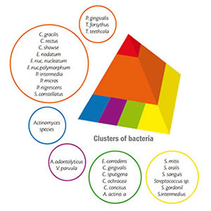Clusters of Bacteria