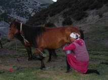 Traite des juments, entre Sary Tash et Osh