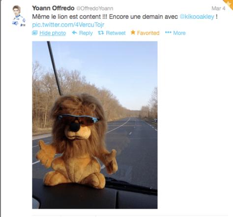 Lion in Oakleys