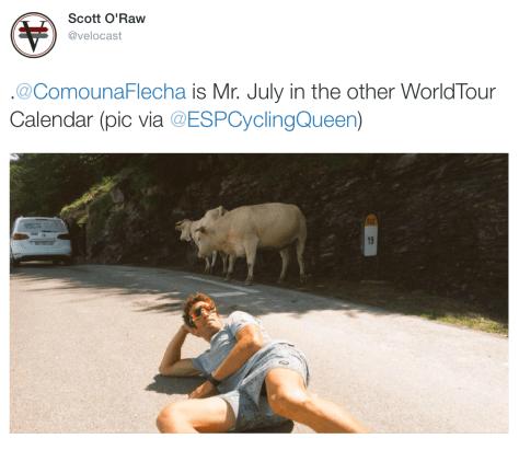 Cows Flecha