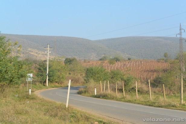 Winnice na horyzoncie- znak że dojeżdżamy na miejsce.