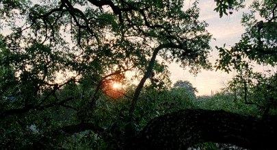 velveteyes.net_the-tree-of-life_03