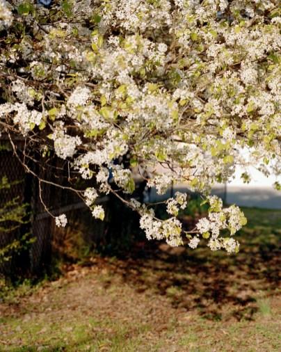 SpringMD2 001