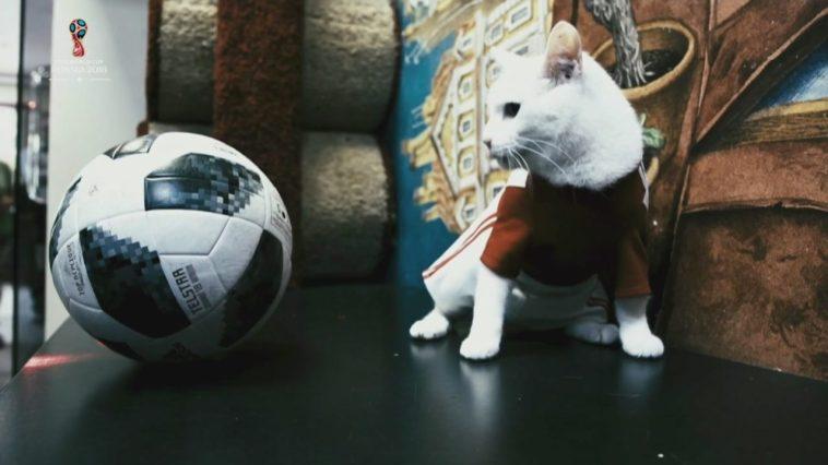 Euro 2020, il gatto Achille indovina il risultato di Italia – Turchia