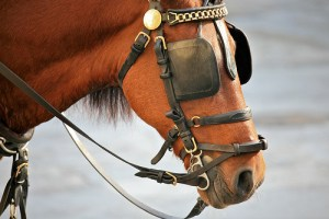 STW_50_horse_blinders
