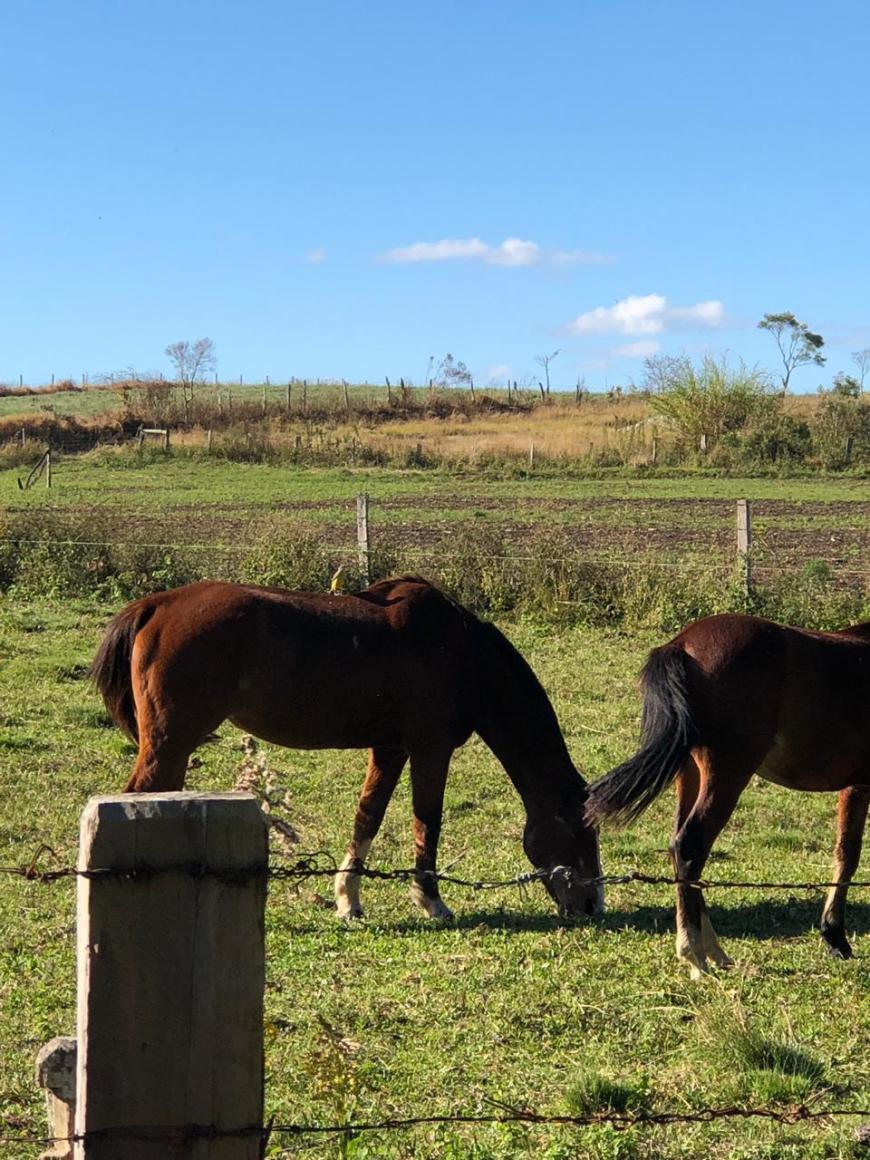 cavalos na colônia witmarsum