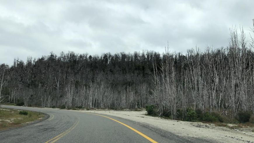 vegetação na estradas no chile