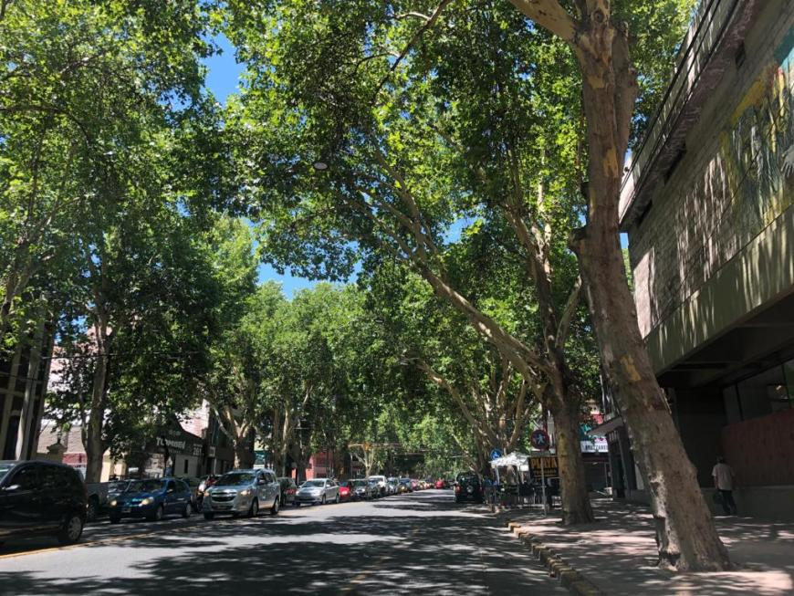 Ruas arborizadas em Córdoba
