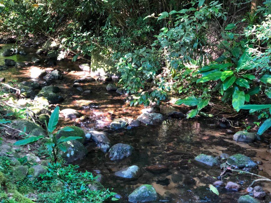 pequeno trecho do rio que corre pelo ekoa park