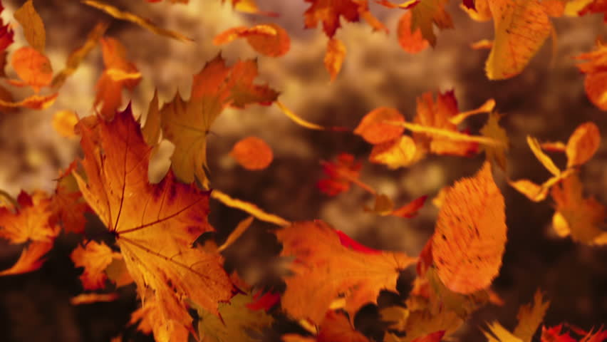 3d Falling Leaves Animated Wallpaper Free Download Fall Conferences Venado Middle School