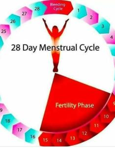 also how to count safe days avoid getting pregnant  venas news rh venasnews