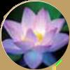 Lotusekstrakt