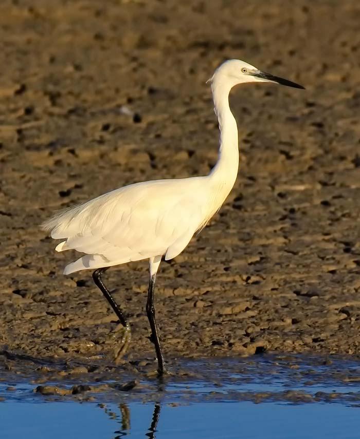 Egret | Vendre ses photos en ligne