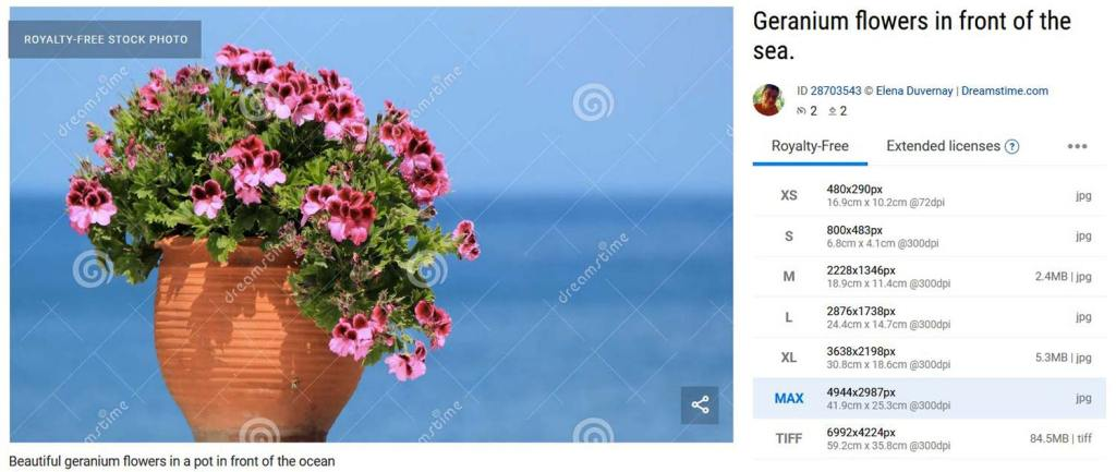 Ventes de Vase de géraniums sur fond d'océan sur Dreamstime | Vendre ses photos en ligne