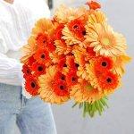 Gerbera Orange 25 Flower, Venera Flowers, online flower delivery dubai