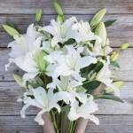 Lily White 10 Flower, Venera Flowers, online flower delivery dubai