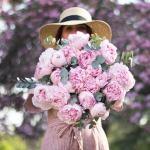 Peony Pink Fresh 20 Flower, Venera Flowers, online flower delivery dubai