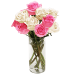 Rose Pink And White Flower, Venera Flowers, online flower delivery dubai
