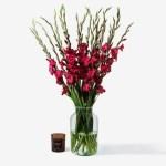 Gladiolus20Red20Fresh20Flower20Venera20flowers201 1