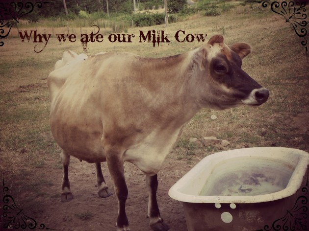 why we ate our milk cow