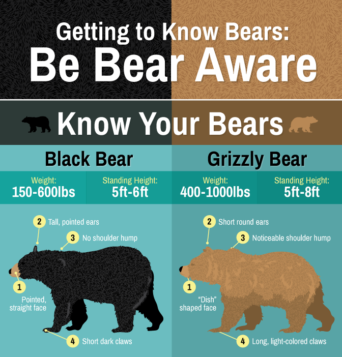 Getting To Know Bears Be Bear Aware