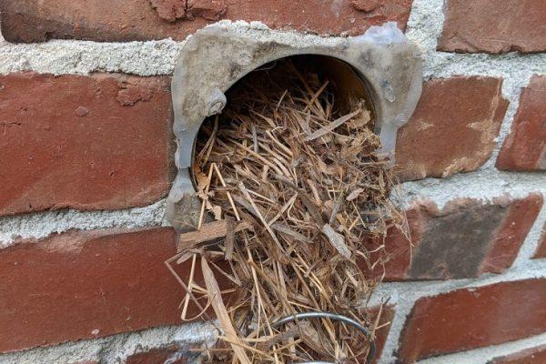 clogged bathroom bird nests