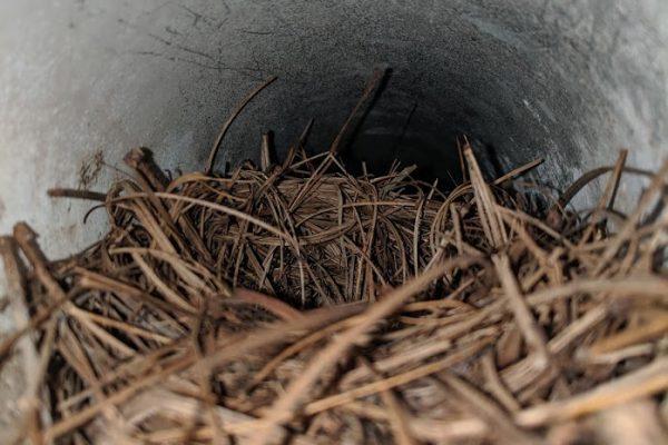 bird nest in dryer vent