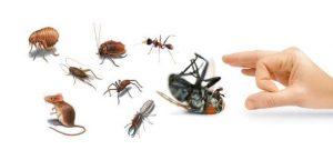 Comment eliminer rapidement les insectes