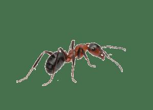 Comment se débarrasser des fourmis pour longtemps