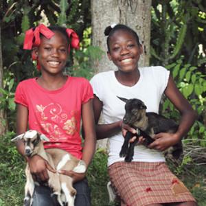 Goat Blog Photo1
