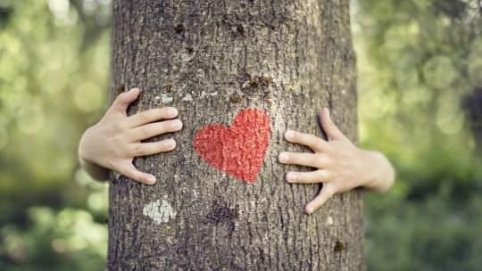 21 novembre: la giornata dei nostri amici alberi