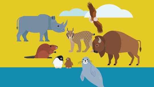 Animali alla riscossa contro il rischio di estinzione
