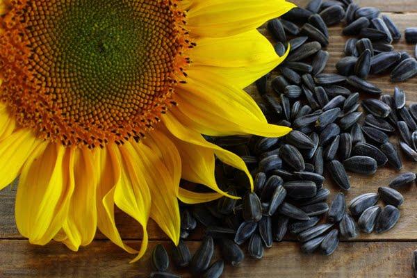 Очистка и калибровка семян подсолнечника