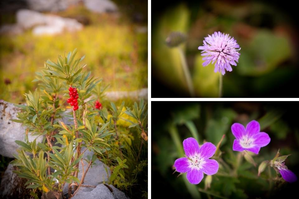 matin-fleurs