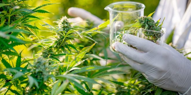 Common Qualifying Conditions Authorized for Medical Cannabis