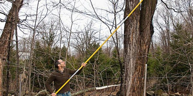 HOW THE POLE SAW MAKES TREE PRUNING EASY?