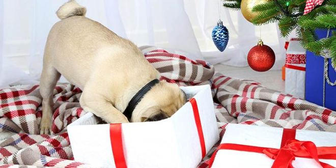 Great gift ideas for your dog