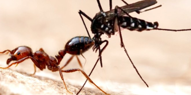 3 Awesome Ways to Get Rid of Ants & Mosquitoes