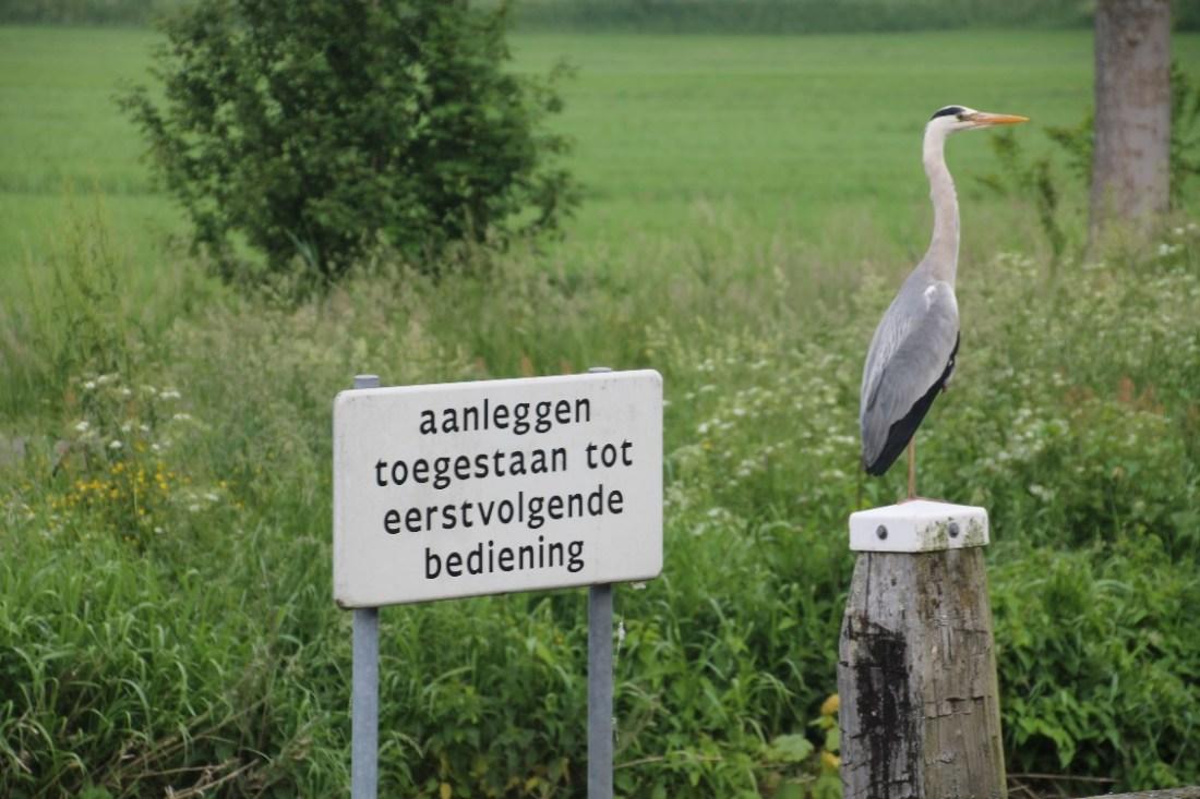 D:\jecke-hexe\Pictures\Solitaire\Friesland 2018\9 bis Tjeukemeer\IMG_2888.JPG