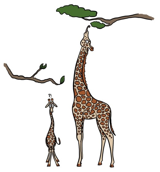 Cartoon of a long form giraffe and a short form giraffe reaching for leaves