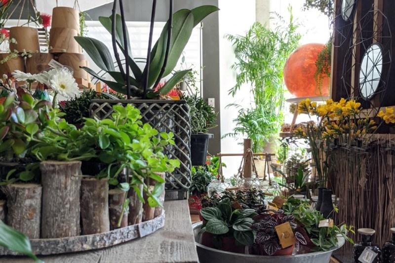 <strong> Decoración, bienestar y más </strong> <br> 10 motivos para tener plantas en casa