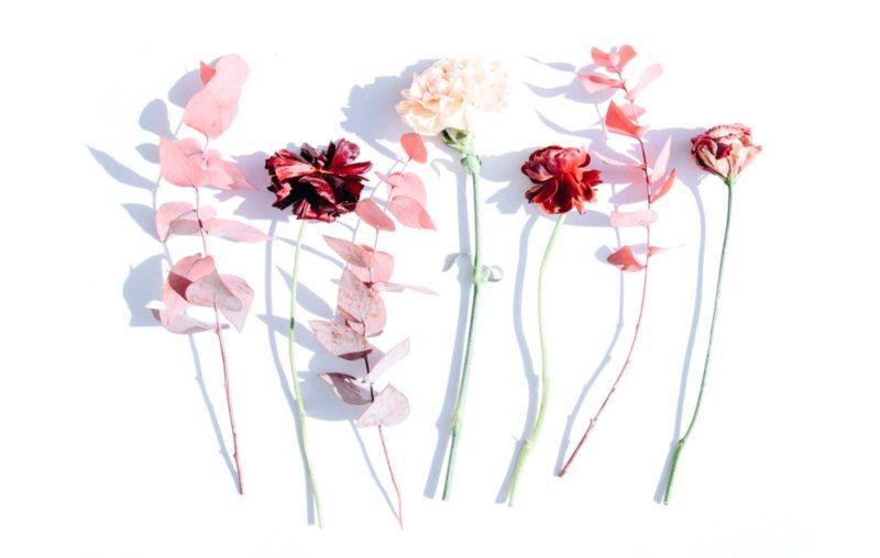 <strong>Secar flores y hojas </strong> <br> Todo lo que necesitas saber para dar un segundo uso a las plantas