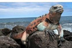 Gay Group Tour of Galapagos Islands