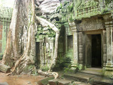 Jungle-enshrouded Ta Prohm