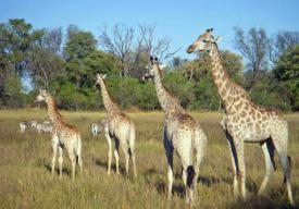 Gay Safari Groups Southern Africa