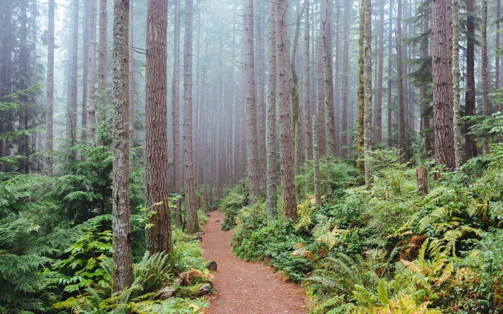 Hike in Washington State