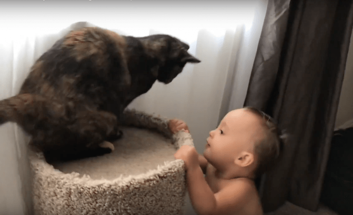 Our Cat and Baby Are Learning to Play With Each Other