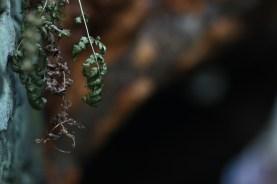 Ferns hanging off the rock ledges