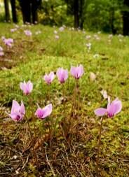 Flowers at Eastwoodhill Arboretum